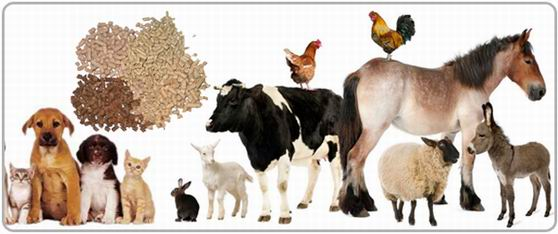 feed fat coating is an effective method to improve feed quality