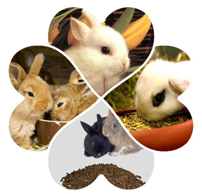 rabbits breeding feed pellets