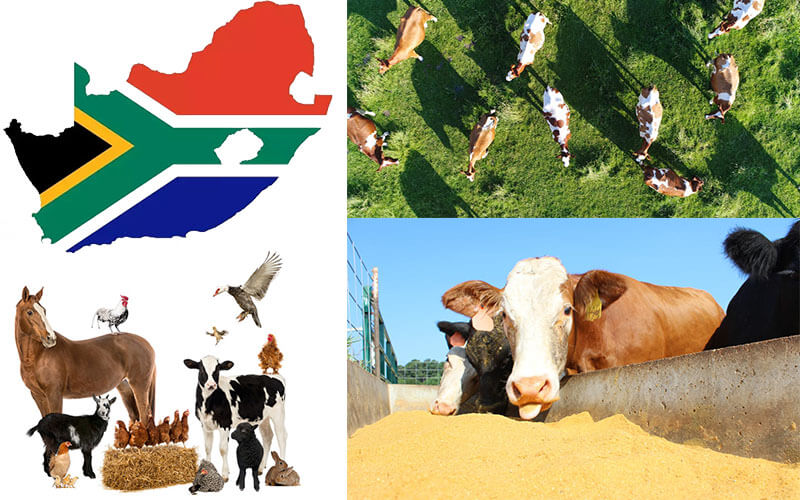 Feed Industry Market Situation in South Africa