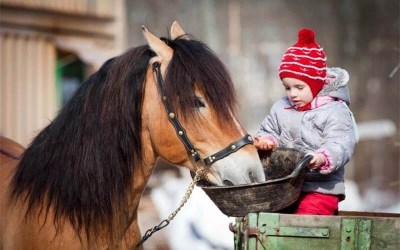 Feed Pellets for Horse Farming