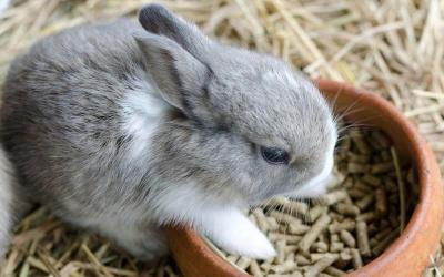 Feed Pellets for Raising Rabbits
