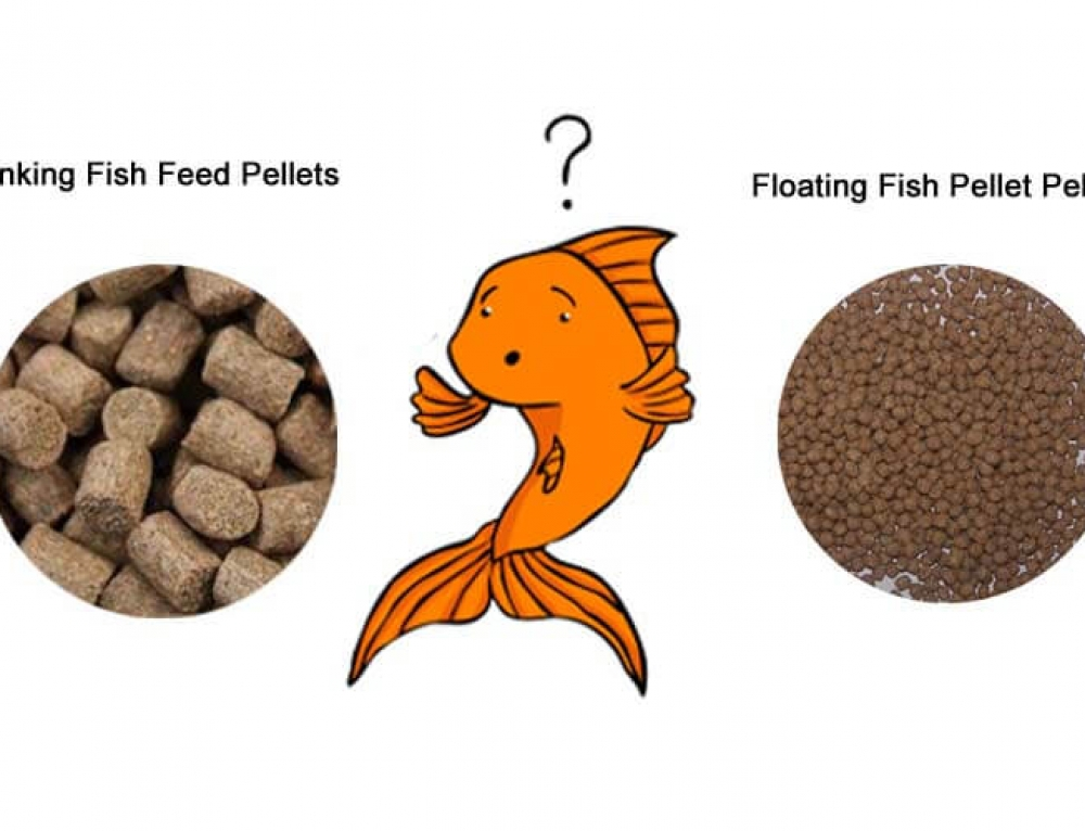 Fish Feed Pellets: To Sink or to Float?