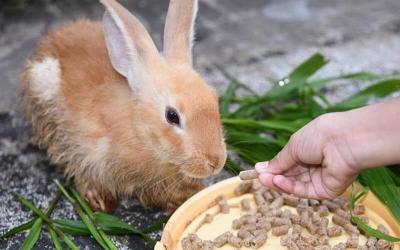Feeding Your Bunny