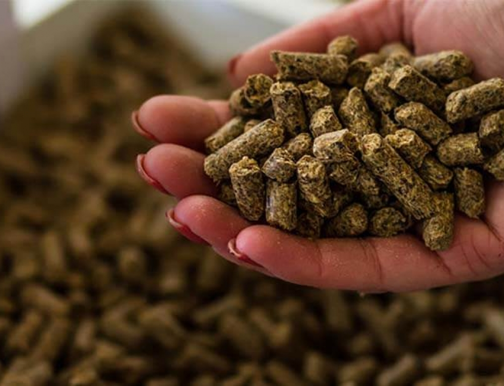 How to Achieve High Quality Feed Pellets