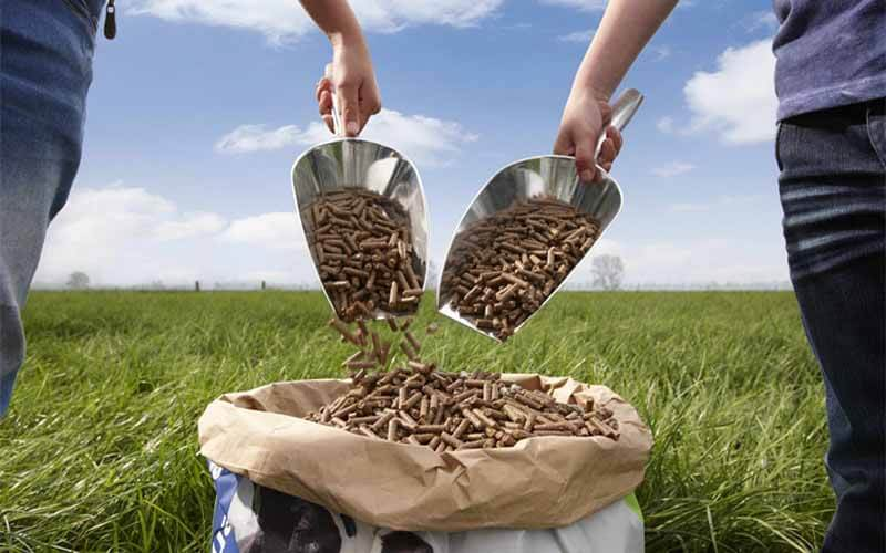 Top 4 Factors Influence Feed Pellet Quality
